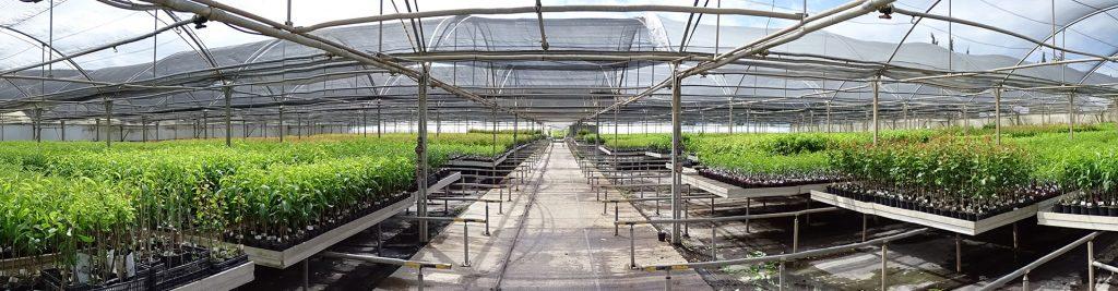 Noticias sobre frutales de hueso y agricultura blog for Viveros en murcia